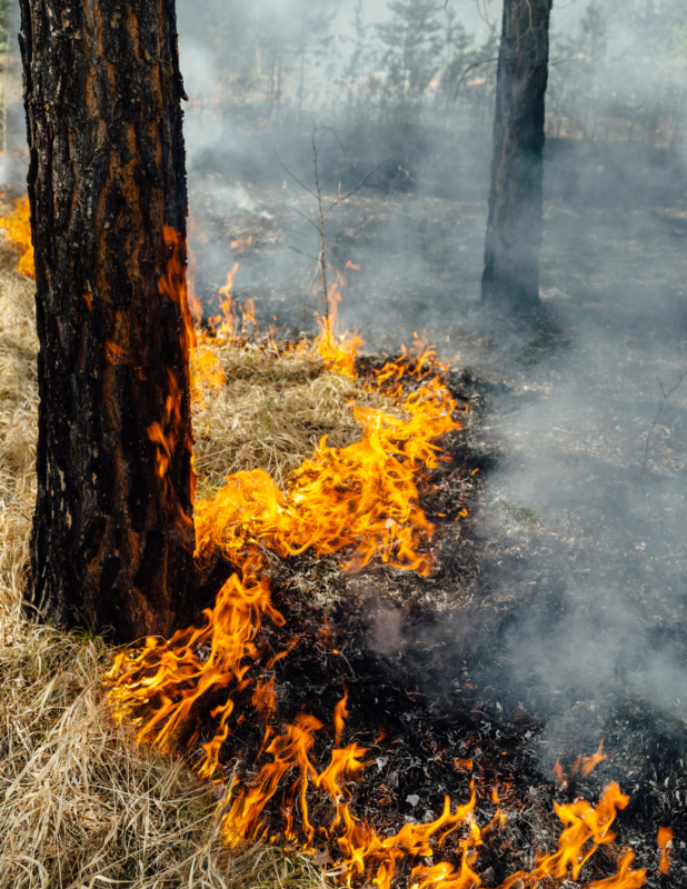 closeup of wildfire at base of forest trees