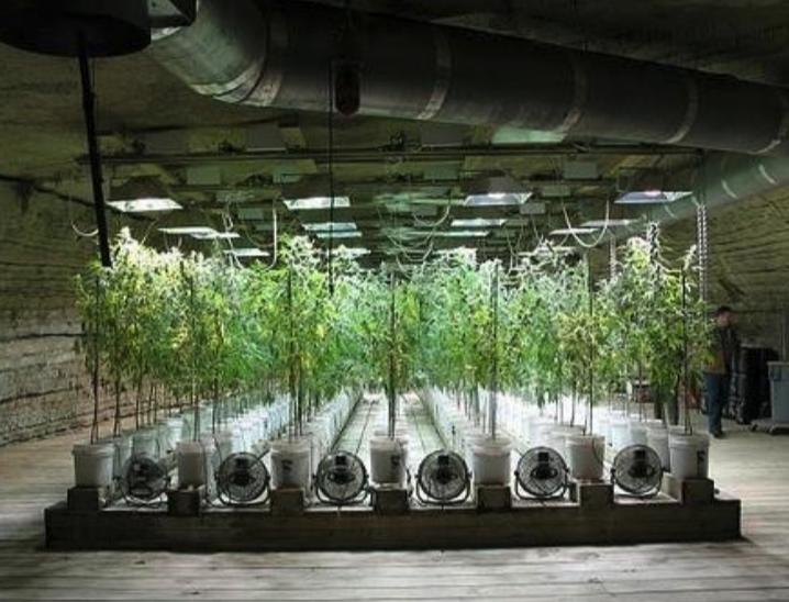 Indoor growing business